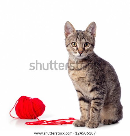 Cute baby tabby cat playing with ball of red yarn on white background - stock photo
