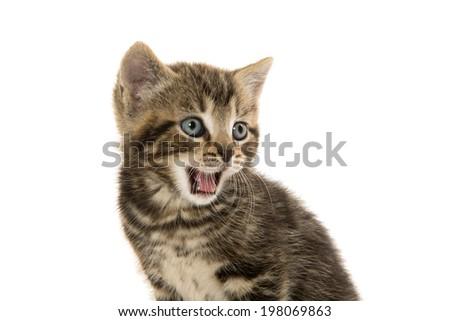Cute baby tabby kitten on white background - stock photo