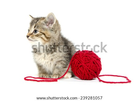 Cute baby tabby kitten with red ball of yarn isolated on white background - stock photo