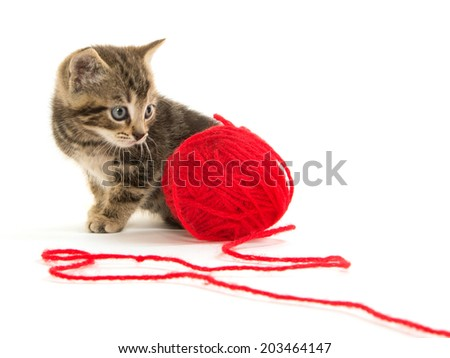 Cute baby tabby kitten with red ball of yarn on white background - stock photo