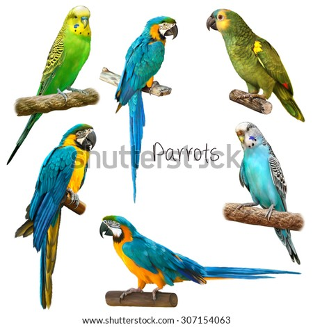 Cute Beautiful green Parrot, Colorful blue parrot macaw. Bright green blue Budgerigar sitting. Illustration Isolated on white background. - stock photo