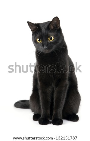 Cute black cat isolated on white - stock photo