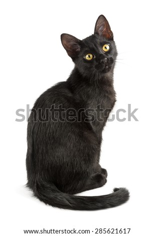 cute black cat looks at you with yellow eyes - stock photo