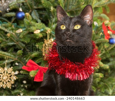 Cute black cat wearing tinsel against green Christmas tree background - stock photo