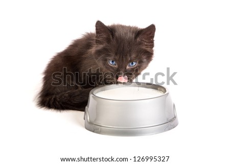 Cute black kitten drinks milk, isolated on a white background - stock photo