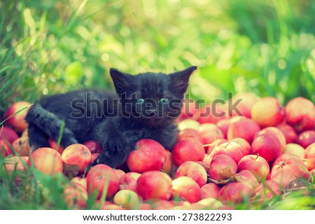 Cute black kitten in the garden lying on red apples - stock photo