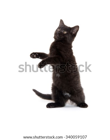 Cute black kitten jumping and playing isolated on white background - stock photo