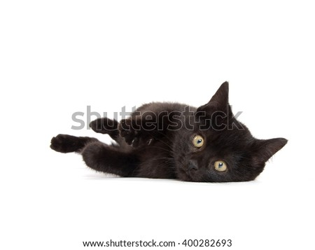 Cute black kitten laying down isolated on white background - stock photo