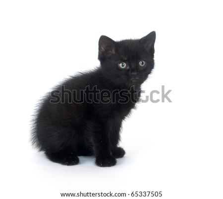 Cute black kitten sitting on white background - stock photo