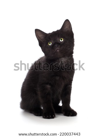 Cute black kitten with green eyes isolated on white. - stock photo