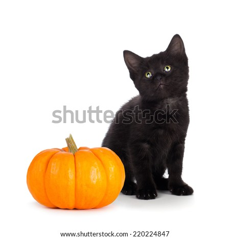 Cute black kitten with green eyes sitting next to a mini pumpkin isolated on white background. - stock photo