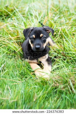 Cute Black Puppy Relaxing  on Green Grass Outside - stock photo