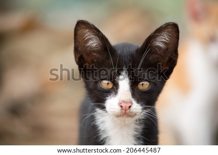 Cute black young cat with blur nature background. - stock photo