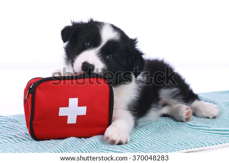 Cute border collie puppy with an emergency kit isolated - stock photo