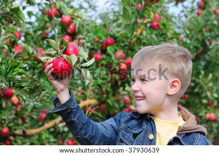 Cute boy in apple orchard - stock photo