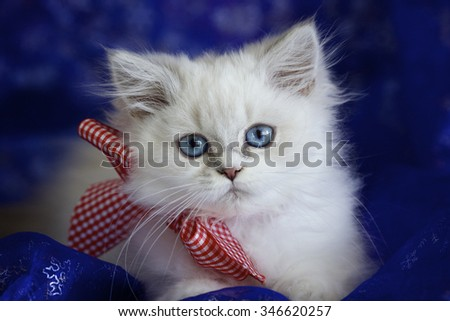 Cute British kitten with red Christmas bow - stock photo