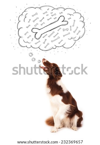 Cute brown and white border collie sitting and dreaming about a bone in a thought bubble - stock photo