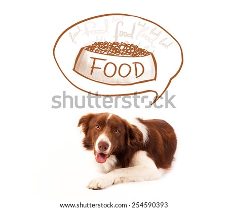 Cute brown and white border collie thinking about a bowl of food in a thought bubble above his head - stock photo