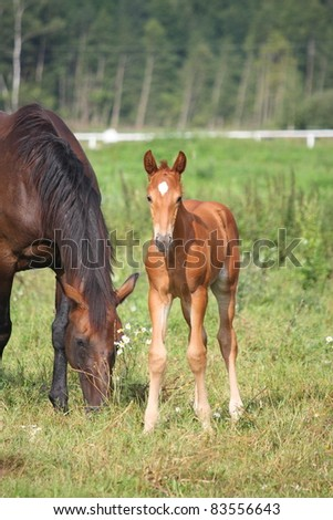 Cute brown foal and his mother - stock photo