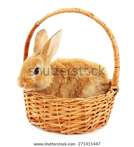 Cute brown rabbit in wicker basket isolated on white - stock photo