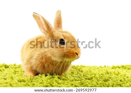 Cute brown rabbit on green grass isolated on white - stock photo
