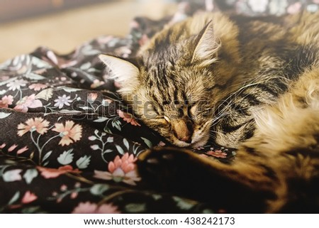 cute brown tabby sleeping on bed, adorable sweet moment, space for text - stock photo