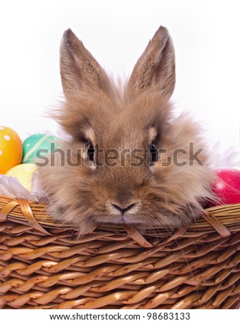 Cute bunnie's portrait in the basket with easter eggs - stock photo