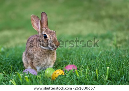 Cute bunny and colorful Easter eggs in the grass - stock photo