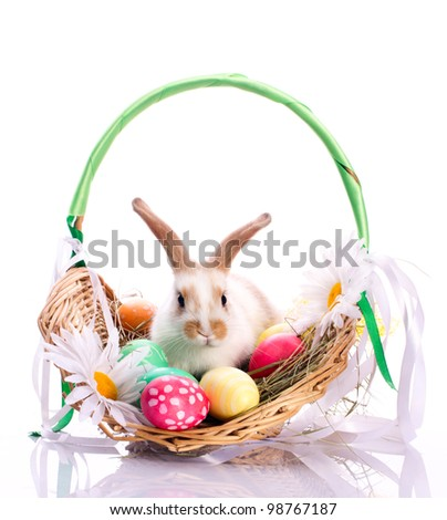 Cute bunny in basket and easter eggs isolated on white - stock photo