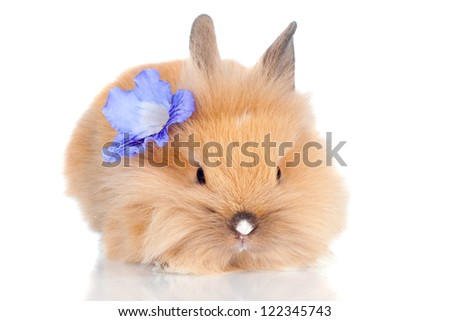cute bunny pet with a flower - stock photo