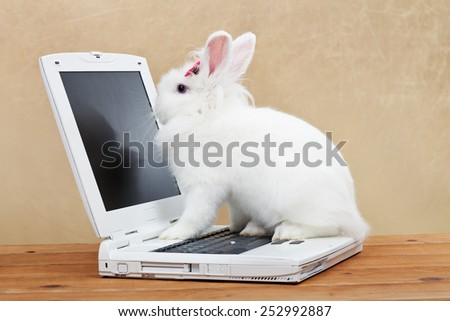 Cute bunny studies computer technology - sitting on laptop - stock photo