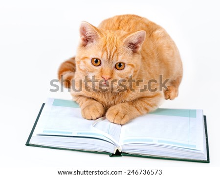 Cute business cat reading notebook (book) isolated on white background - stock photo