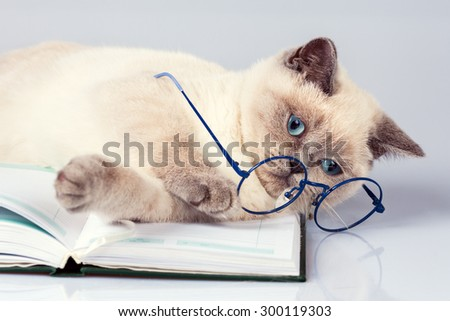 Cute business cat wearing glasses, lying on the notebook (book) - stock photo