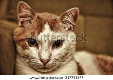 cute cat - stock photo