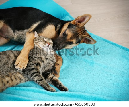 Cute cat and funny dog on blue plaid - stock photo