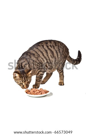 cute cat eating from a dish - stock photo