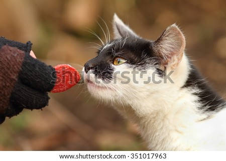 cute cat eating slice of salami from hand - stock photo