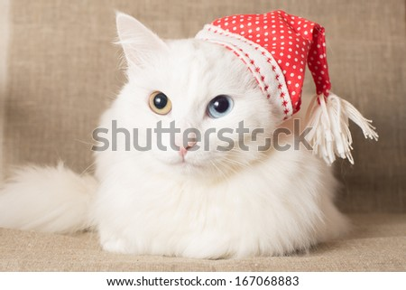 Cute cat in red christmas hat - stock photo