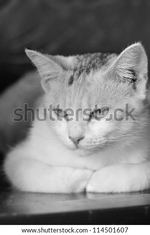 Cute cat on a chair - stock photo