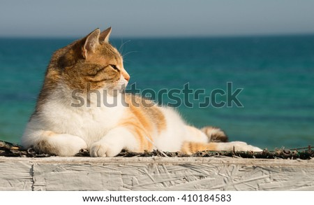 Cute cat on the Black Sea in Odessa in the spring  - stock photo