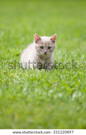 Cute cat on the green grass - stock photo