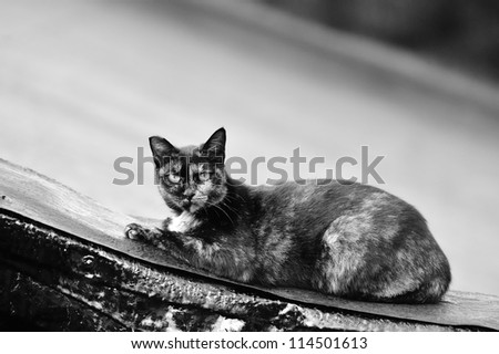Cute cat on the roof - stock photo