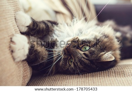 Cute cat on the sofa in retro style colors - stock photo