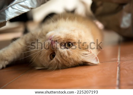Cute cat playing on the floor. - stock photo