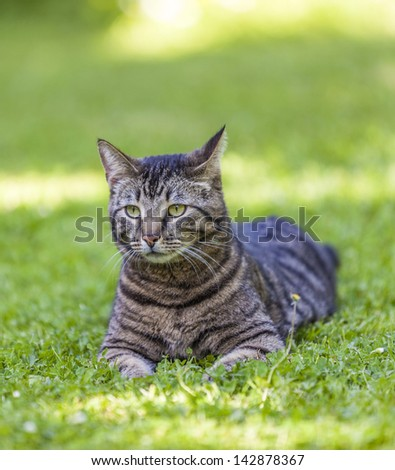 cute cat relaxes in the garden - stock photo