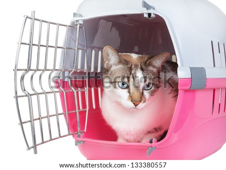 Cute cat sitting home watching from the cell. On a white background. - stock photo