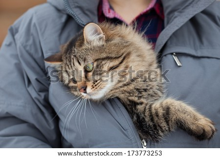 Cute cat sitting in a jacket  - stock photo