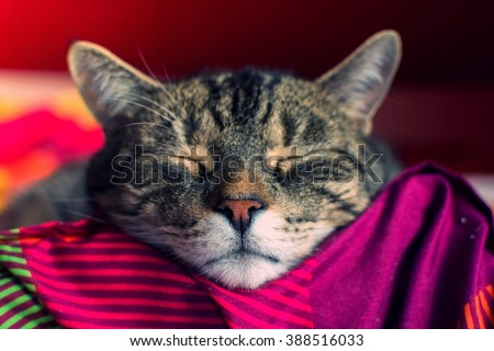 Cute cat sleeping in the room - stock photo