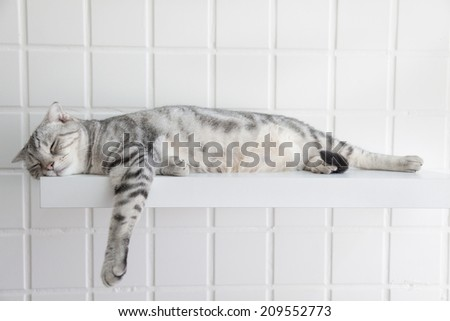 cute cat sleeping on the platform in the house - stock photo