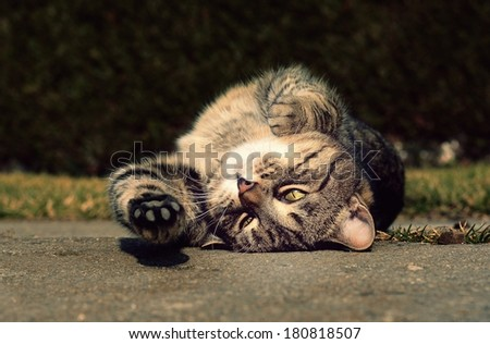 Cute cat stretches and resting in the garden - stock photo